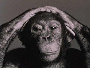 elitismstyle_chimpanzee-2